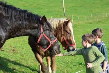 Pferde als Freunde