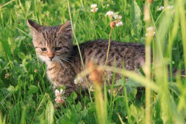 Katzenbaby Karl