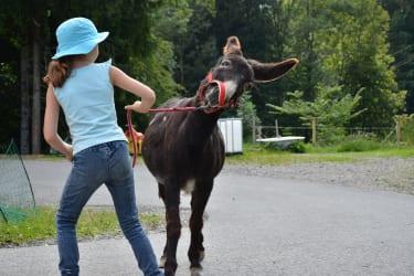 Unser sturer Esel