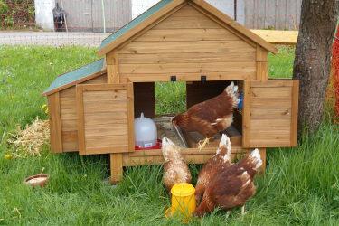 Unsere Hühner Gretl, Paula, Frieda und Lotte