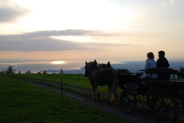 Romantische Kutschenfahrt in den Sonnenuntergang überm Bodensee
