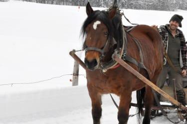 Unser Pferd Liesl und Martin
