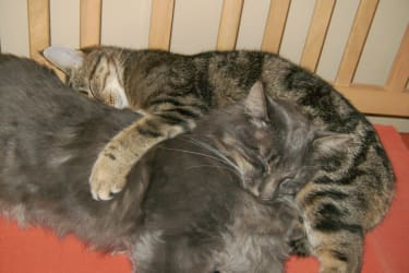 Katzen, Isidor - Emma