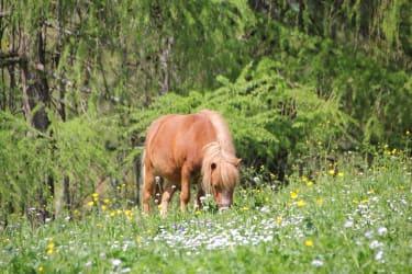Unser Pony Sissi