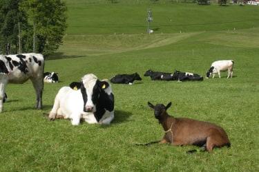 Im Sommer sind unsere Tiere jeden Tag auf der Weide