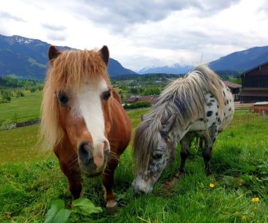 Ponys am Hof