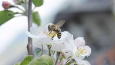 Flotte Bienen