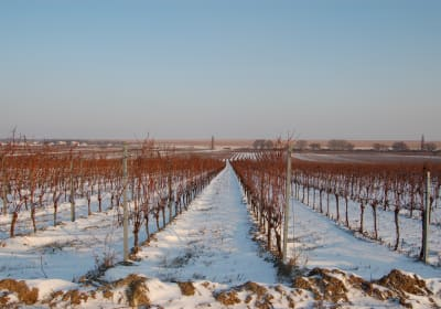 Winter im Burgenland