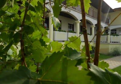 Gästehaus - Weingut Fam. Palkowitsch