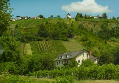Bio-Weingut und Gästezimmer Reiger