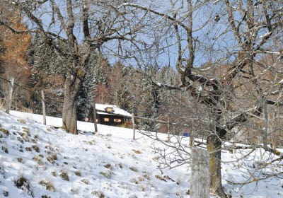 Ferienhütte Alte Mühle