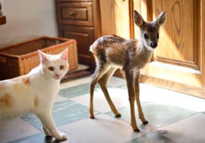 Kleines Reh mit einer Katze