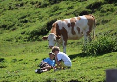 Alpine pasture hike - watch the milking