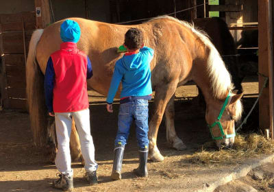 Pferde putzen und liebhaben