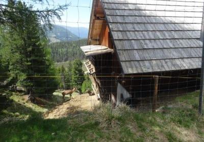 Zirbenhütte Greiler