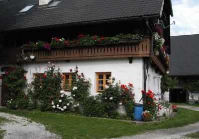 Isländerhof Köck vlg. Kristanhof