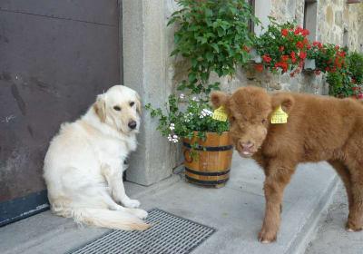 Armin und Lilli