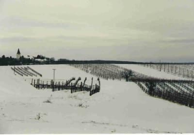 Urlaubs - Weingut Kriegl