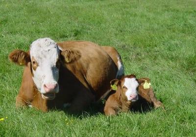 Mutter mit Kind auf der Wiese