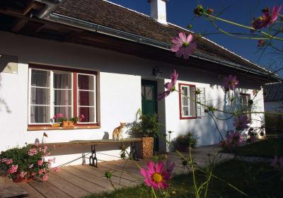 Ferienhaus mit Katze