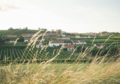 Kellergasse Mittelberg