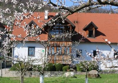 Blick von unserem Marillengarten zum Haus