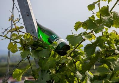Weinbau Eisenbock - Weingarten