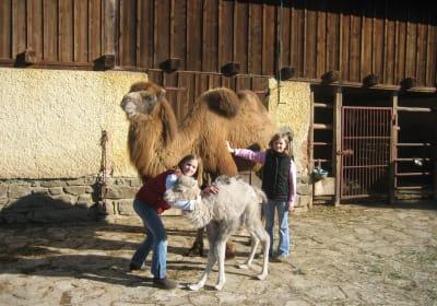 Kamele in Eitenthal