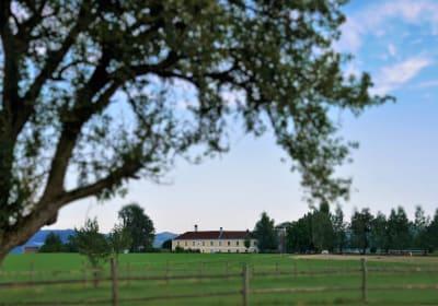 Unser Hof befindet sich im sanft hügeligen Alpenvorland mitten im Mostviertel.