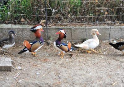 Ferienwohnung Zant'n Hof - unsere Enten