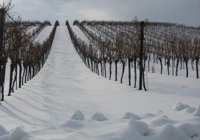 Weingut-Gästehaus zum Schwalbennest