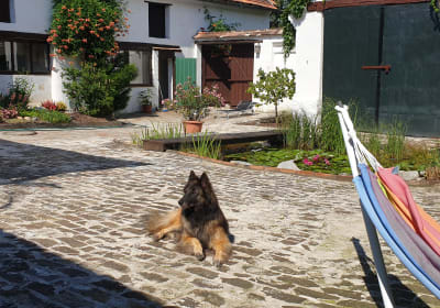 Refugium Ottenthal - Hund Patio