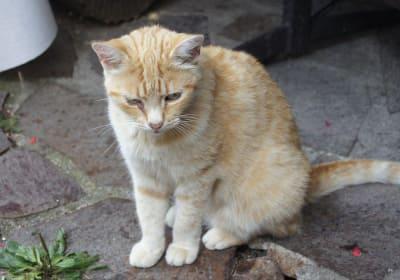 Die Gartenlaube - Jonathan, der Katzenhausherr