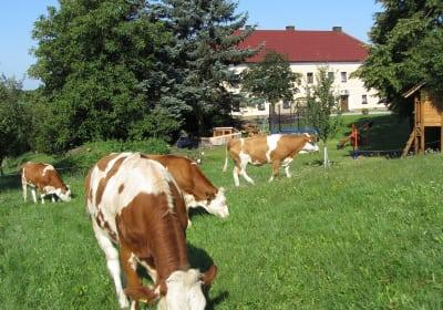Steinursch