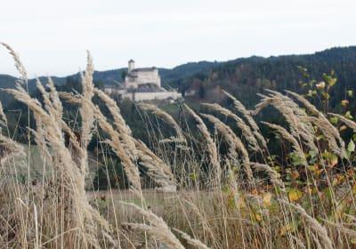 Biohof Besenbäck - Burg Rappottenstein