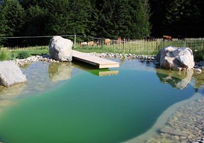 Steg am Schwimmteich