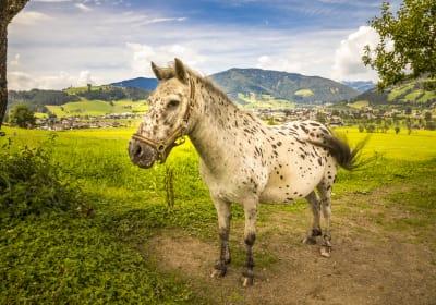 Unser Pferd