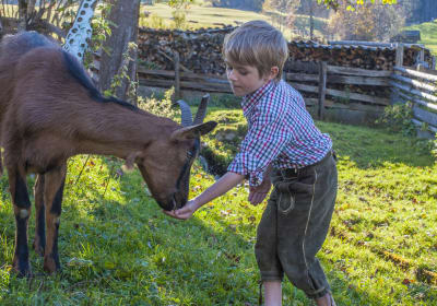 Tiere füttern und streicheln