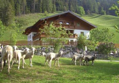 Untersteinhof
