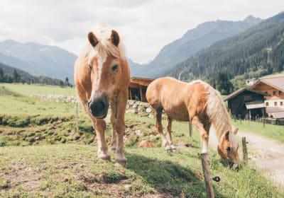 Unsere Pferde Lisl und La Donna