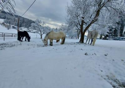 Auch Pferde lieben die weiße Pracht