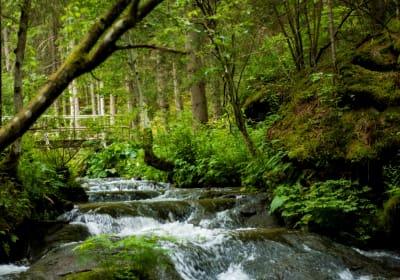 In unserer Umgebung , für die Kinder toll zum Spielen, ideal zum Spazieren entlang dieses Baches....