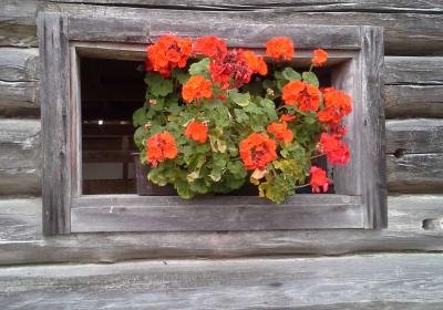 Blumen im Stallfenster