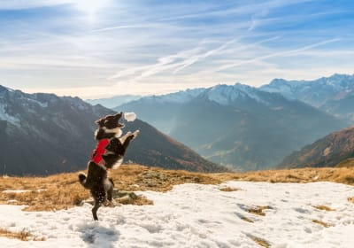 Holidays with your dog in austria
