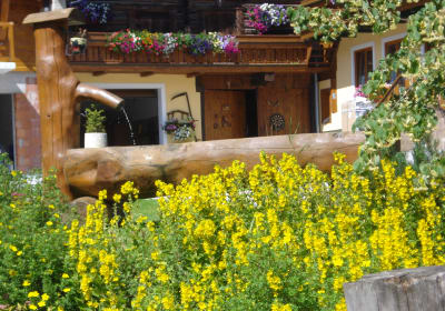 Bauernhof-Pension Greimelbacher