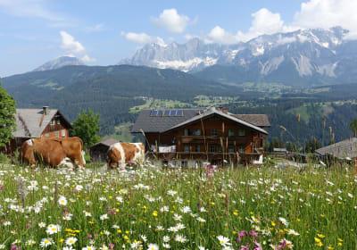 Blumenwiese-Kühe-Bauernhof