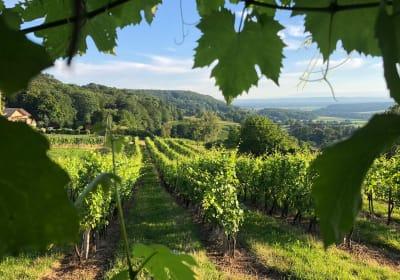 Weinbau Felkar