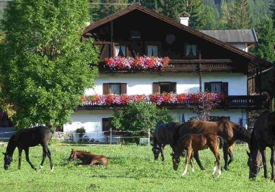 Tschaperhof - Urlaub mit Pferd