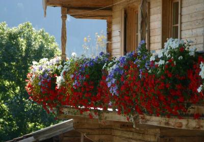 Blumen am Balkon