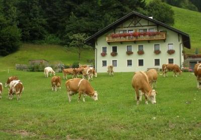 Unseren Kühen schmeckt's